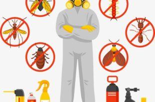شركة امست لمكافحة النمل الابيض بالدمام